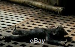 Rick Baker Studios Baby Ape Armature From Greystoke Legend of Tarzan Signed COA